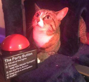Party Button Cat